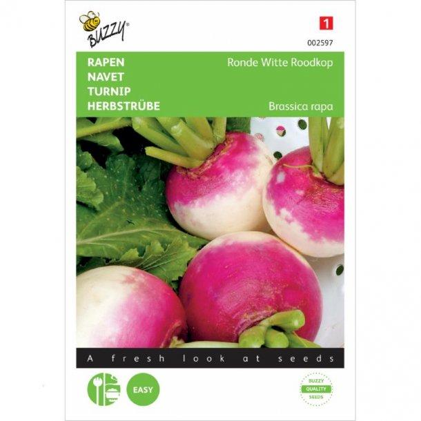 Brassica rapa De Nancy