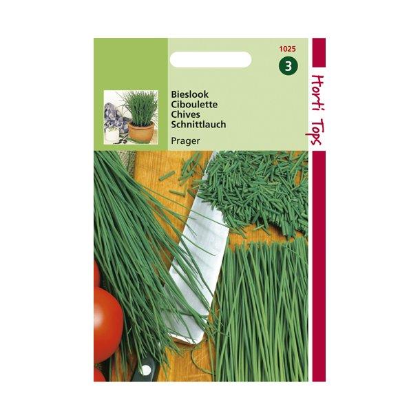 Allium schoenoprasum Prager