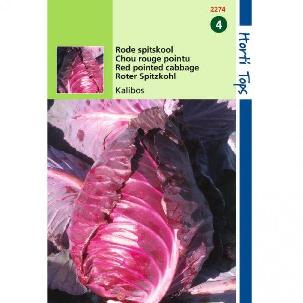 Brassica oleracea conica Kalibos