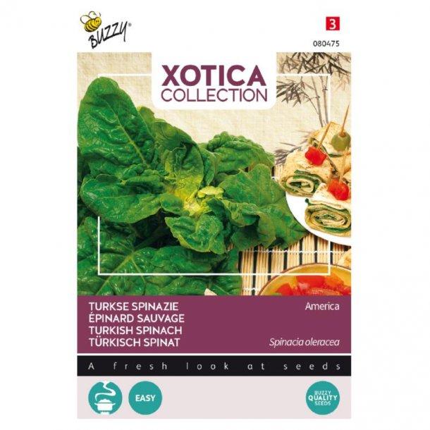 Spinacia oleracea America