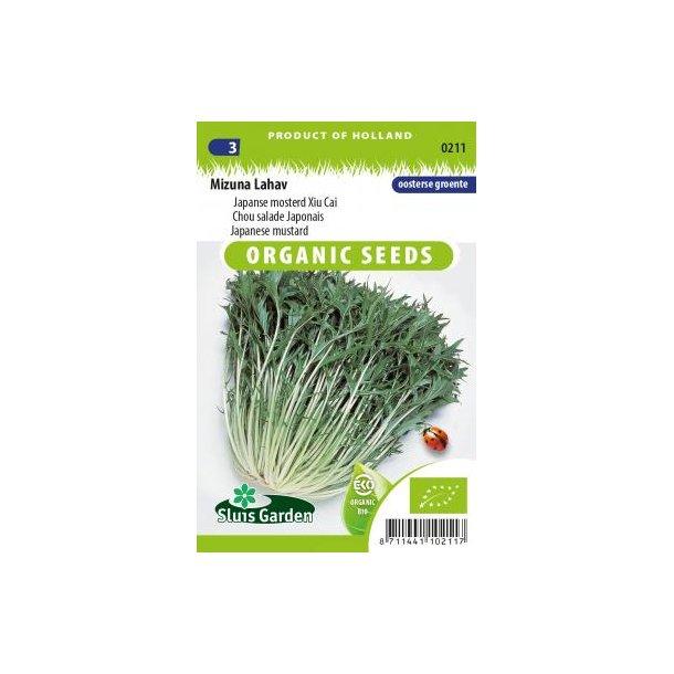 Brassica rapa. var. japonica Mizuna Lahav - Økologiske