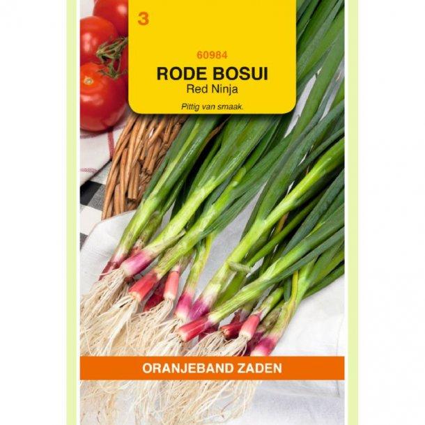 Allium fistulosum Red Ninja