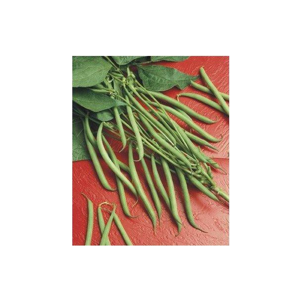 Phaseolus vulgaris Lipsos / Xantos