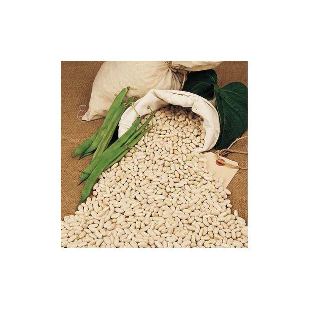 Phaseolus vulgaris White / Coco Blanco