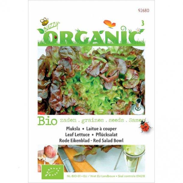 Lactuca sativa Red Salat Bowl - Økologiske