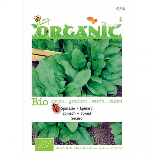 Spinacia oleracea Securo - Økologiske
