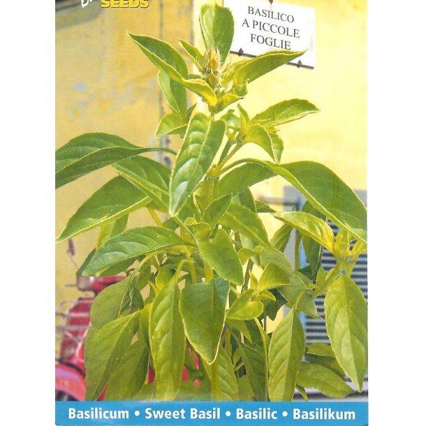 Ocimum basilicum A Piccolo Foglie