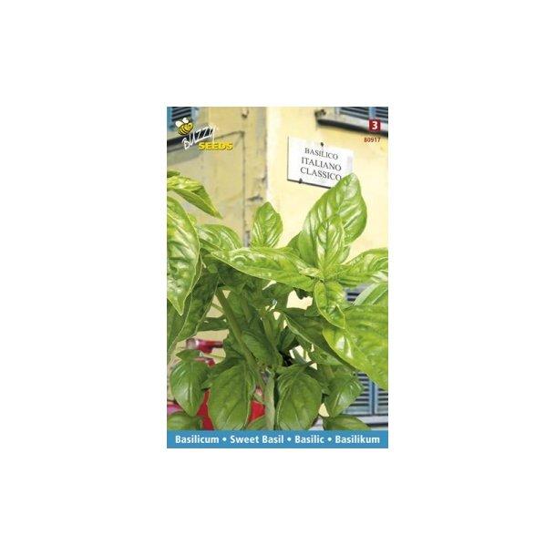 Ocimum basilicum Italiano Classico