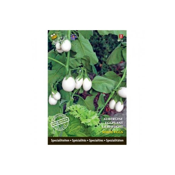 Solanum melongena White Eggs