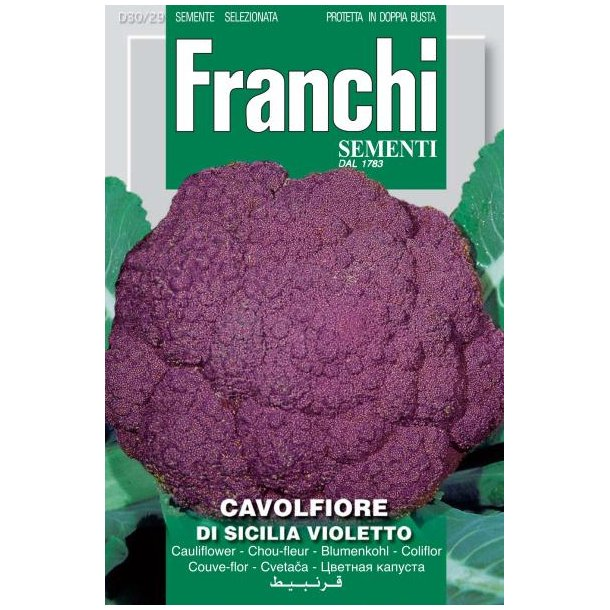 Brassica oleracea botrytis Di Sicilia Violetto