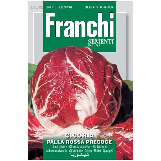 Cichorium intybus L. Palla Rossa Precoce