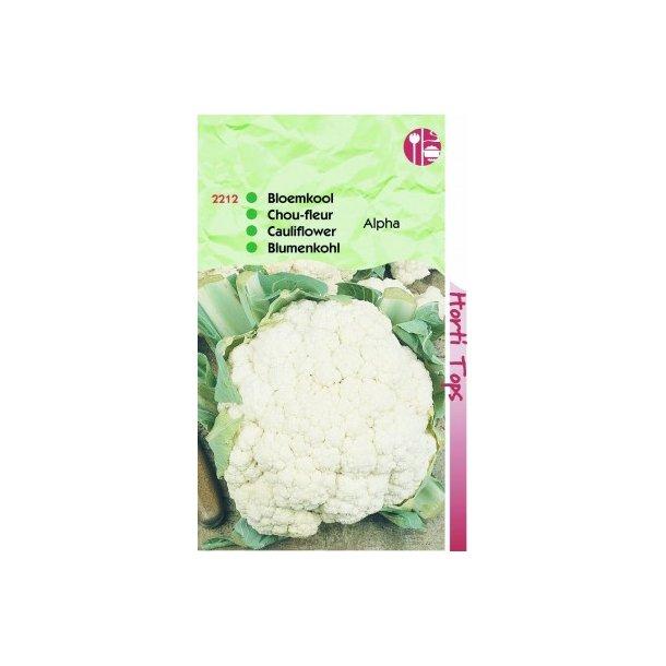 Brassica oleracea botrytis Alpha 7