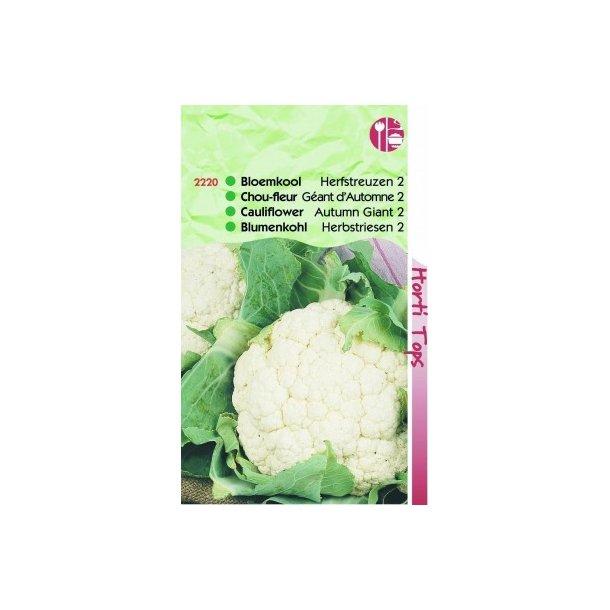 Brassica oleracea botrytis Autumn Giant 2
