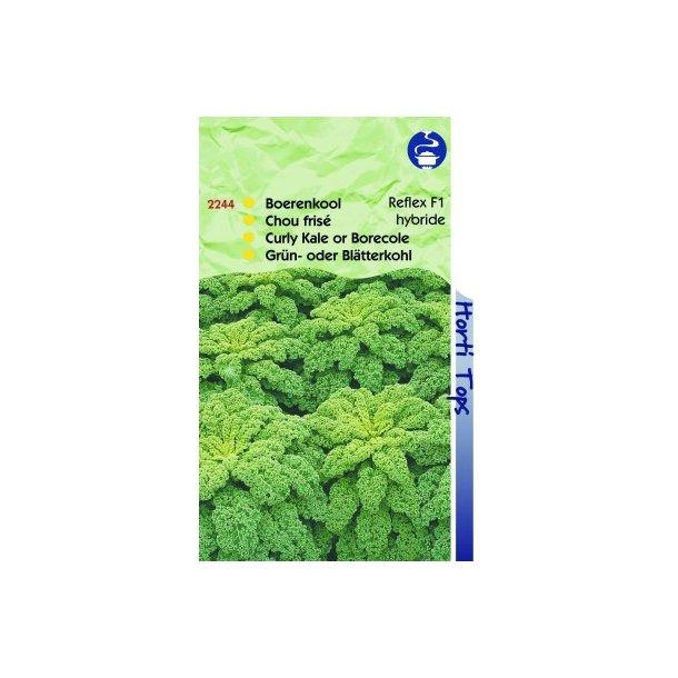 Brassica oleracea convar. acephala var. laciniata Reflex F1