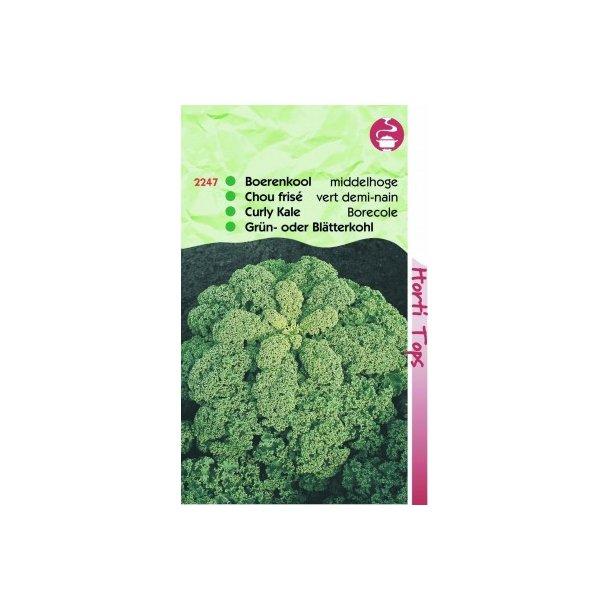 Brassica oleracea convar. acephala var. laciniata Half Tall Fine Curled