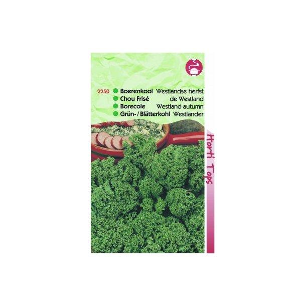 Brassica oleracea convar. acephala var. laciniata Westland Autumn