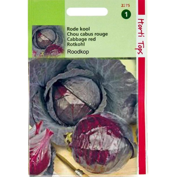 Brassica oleracea var. Capitata Cabeza Negra 2