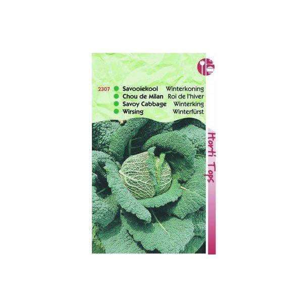 Brassica oleracea sabauda L. Winterkoning 2