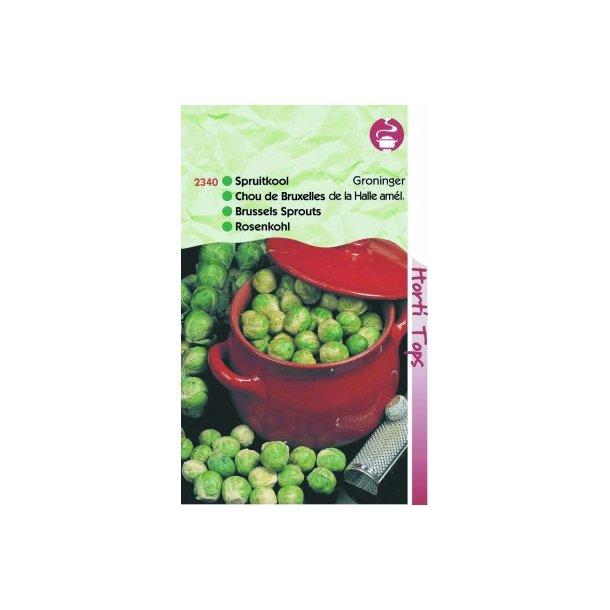 Brassica oleracea gemnifera Groninger