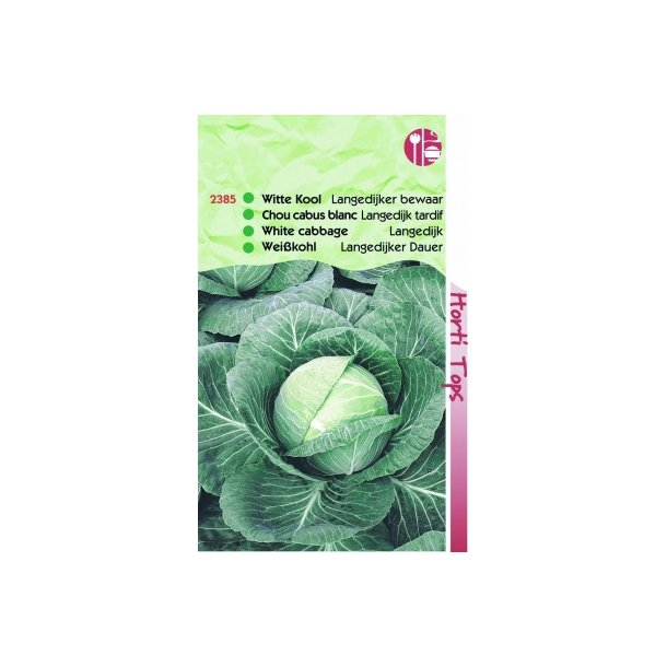 Brassica oleracea capitata Holland Late Winter