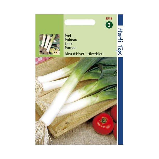 Allium porrum Libertas - Late Hiverblue