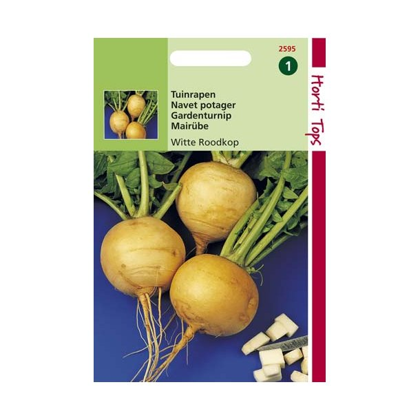 Brassica rapa L. var. rapa Golden Ball Improved