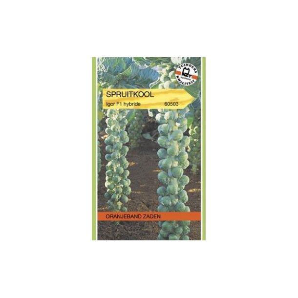 Brassica oleracea Gemnifera Igor F1