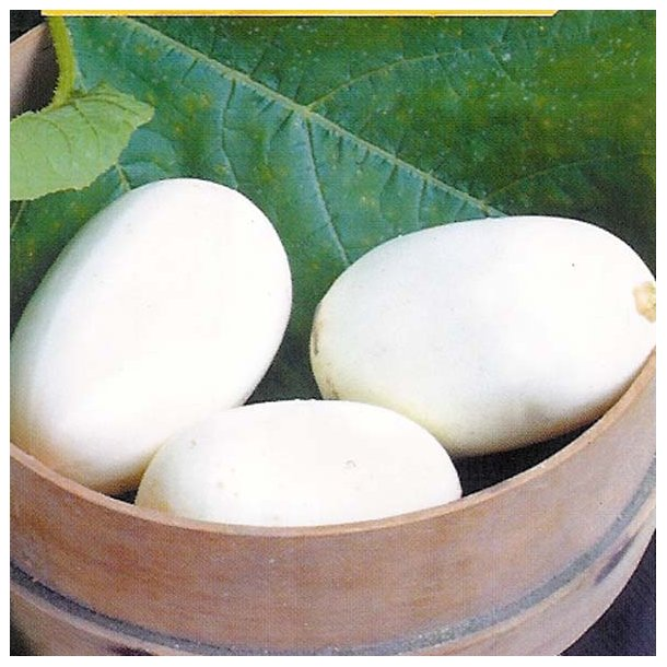 Cucurbita Pepo Nest Egg
