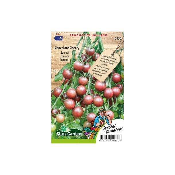 Solanum lycopersicum Chocolate Cherry