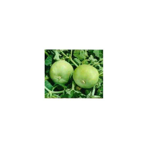 Citrullus vulgaris var. Fistulosus Tinda