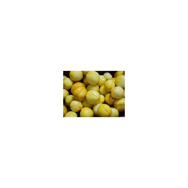 Cucumis sativus Crystal Apple / Lemon