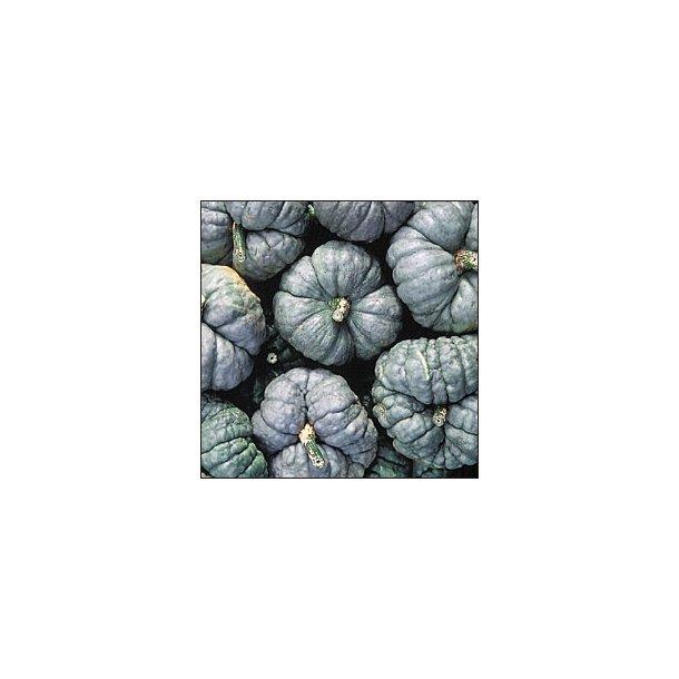 Cucurbita maxima Triamble