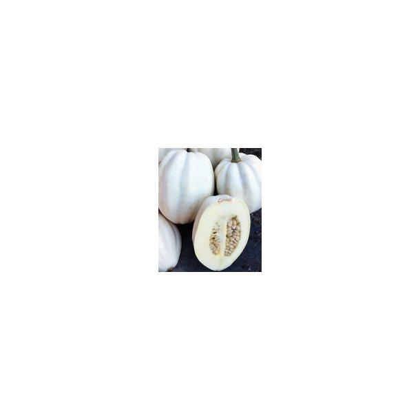 Cucurbita pepo Mashed Potato