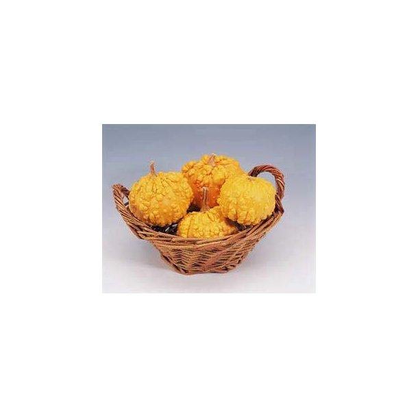 Cucurbita pepo Frederic / Orange Warted